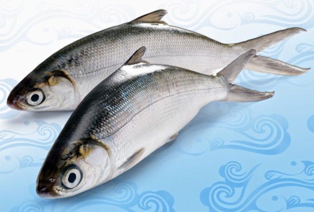 Resep Masak Ikan Bandeng Yang Lezat